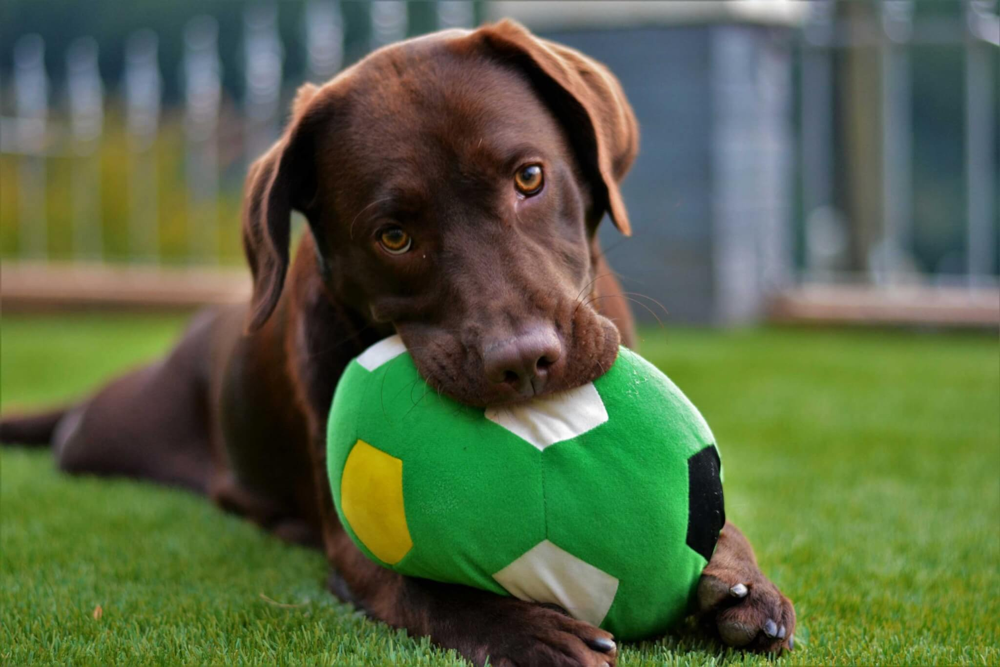 Multi-location Doggie Daycare and Boarding Operations